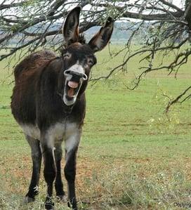 whole donkey
